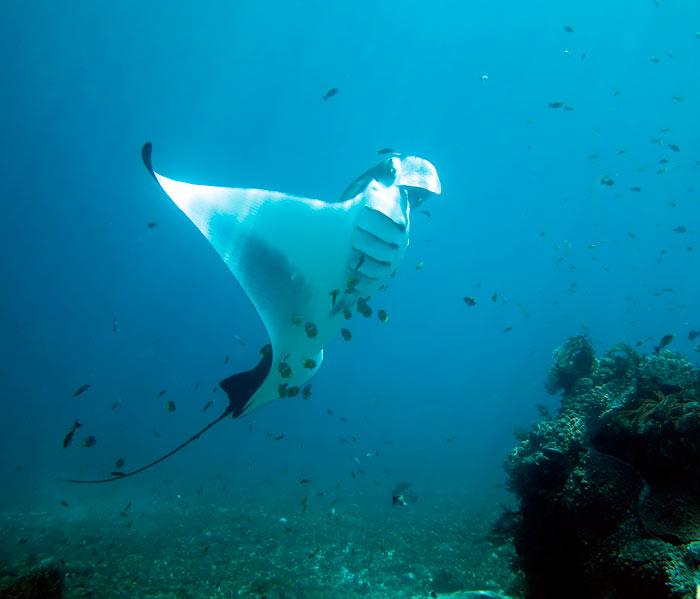 komodo diving cruise