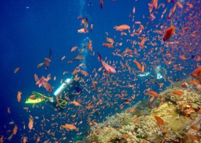 galerie-plongee-indonesie14