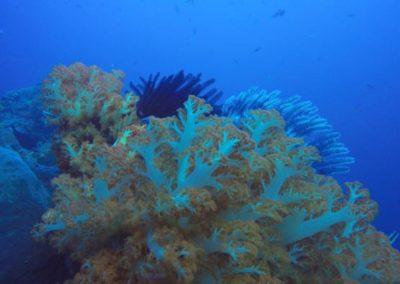 galerie-plongee-indonesie13