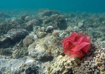 galerie-plongee-indonesie16
